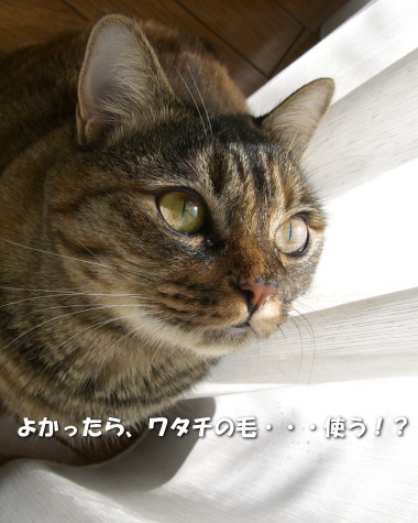 Chamako438