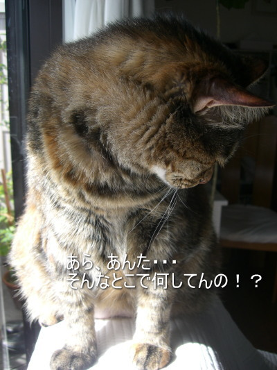 Chamako667_4