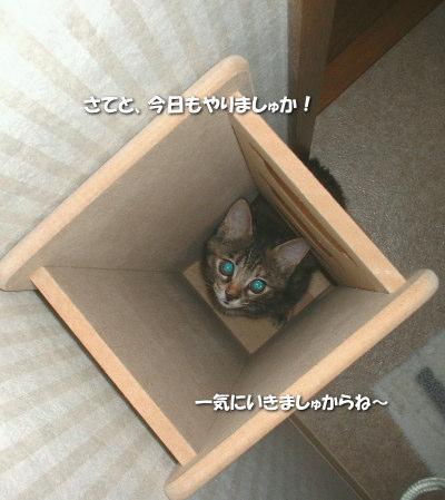 Tyamako34_3