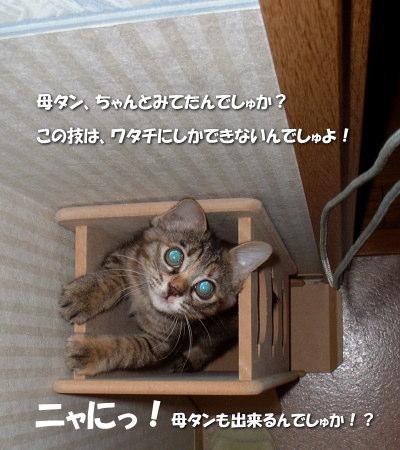 Tyamako36_1