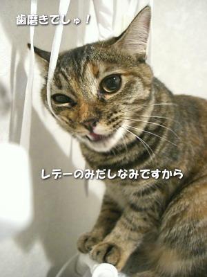 Tyamako383_3